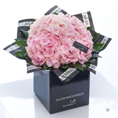 Blushing Pink Hydrangea Hand tied