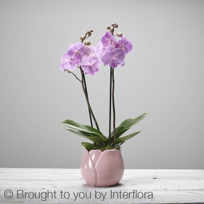 Mothers Day Orchid