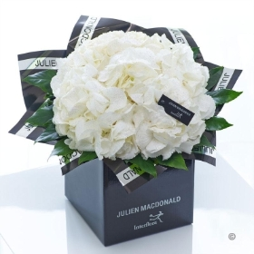 Sophisticated White Hydrangea Hand tied