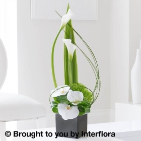 Cool Calla Lily & Orchid Swirl Arrangement